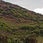 Siemen-Mountain11