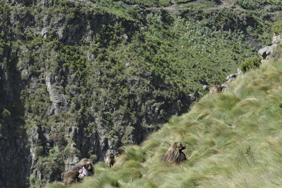 menz guassa trekking