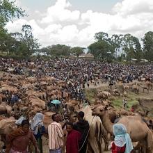 bati market with balehageru trekking ethioia